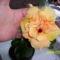 narancsszínű (dupla szirmú) hibiszkusz virága