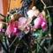 Lepke Orchidea 10