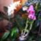 Lepke Orchidea 12
