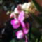 Lepke Orchidea 7