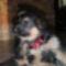 kicsi Lola2