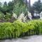 Virágos előkert