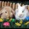 a tojásfestéssel,a nyuszikkal és a bárányokkal 1