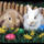 husvét ünnepén
