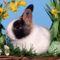 Kellemes húsvéti ünnepeket!