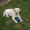 Lili a labradorunk