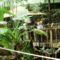 Látogatás Nagytétényen a Tropikáriumban 32