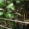 Látogatás Nagytétényen a Tropikáriumban 33