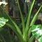 Látogatás Nagytétényen a Tropikáriumban 35