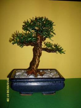 bonsai fenyő
