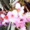 Az utcán is nyílnak virágok. 9