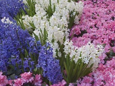meseszép virágok 2