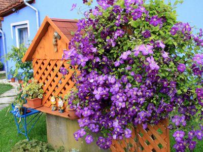 meseszép virágok 6