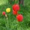 Tavasz 009