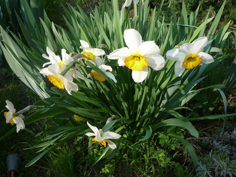 Tavasz 010
