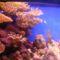 A korallok szineihez semmi nem hasonlítható