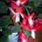 Az én virágaim 003