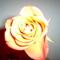 Az én virágaim 009