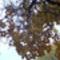 Őszi pillanatok 072