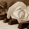 rózsa22