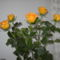 sárga rózsák