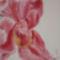 Orchidea (részlet)