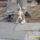 Molly a kis kutyus