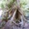 GREAT OCEAN ROAD az Esőerdő fája