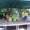 Bográcsolás Rákoshegyen a XVII kerületben 9