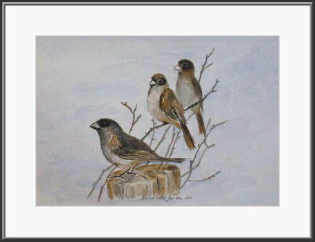 Pihenö madárkák.