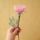 rózsaszín rózsaszál