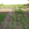2010 májusi kertünk 11