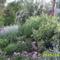 zöld növények között2
