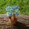 virág katicával