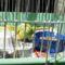 Hullámos papagáj - hím 4