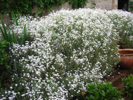 Májusi kert