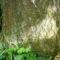 20 éves fa töve