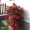 Virágoszlop Félfutó Muskátlival