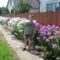 IMG_0666 Danika a virágokkal