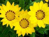 Az emberek és a virágok is a fényet kedvelik 6