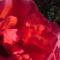 Saját  Virágaink 11