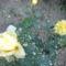 Saját  Virágaink 12