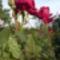 Saját  Virágaink 4