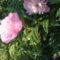 Saját  Virágaink 6