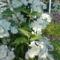 Saját  Virágaink 7