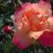 Saját  Virágaink 9