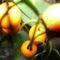 növények 0082010