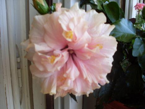2010-08-28virágok 007