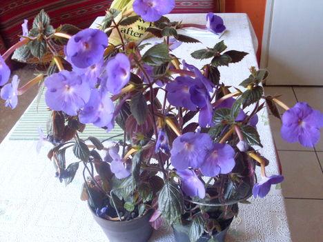 2010-08-28virágok 015