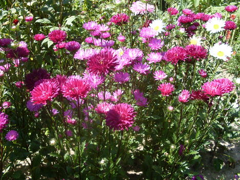 2010-08-28virágok 041
